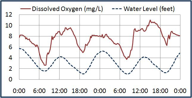 In water chestnut beds, oxygen levels are tide dependent. The above graph displays dissolved oxygen concentrations and water levels at the Tivoli Bay South station on July 13 and 14. The rising tide brings oxygen-rich waters from the main stem of the river into the bay. When the tide recedes, the sensors observe decreasing dissolved oxygen concentrations as the plant beds deplete the oxygen supply brought in by the high tide.